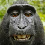 monkeysystem